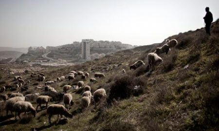 Israeli settlers assault shepherds near Bethlehem